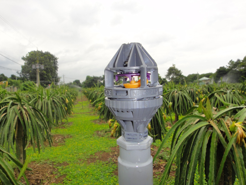 Thiết bị tưới phun mưa cho cây Thanh Long