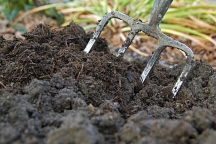 Tưới phun mưa giúp cho đất tơi xốp
