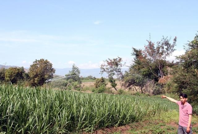 tưới tiết kiệm nước tại Ninh thuận